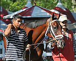 8.13.10 Interactif in the paddock before the National Racing Museum Hall of Stakes