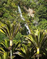 Nikau Palms of coastal forest with waterfall in Punakaiki, Paparoa National Park, Buller Region, West Coast, New Zealand, NZ