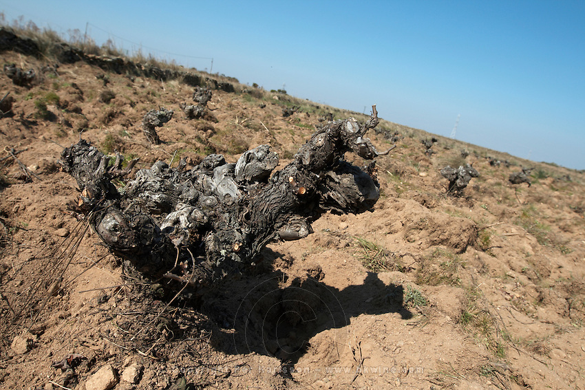 old vine sandy soil Bodega La Setera, DO Arribes del Duero spain castile and leon