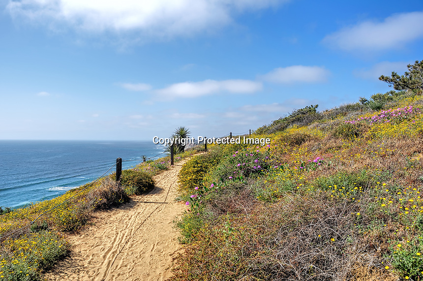 View at Torrey Pines Park near San Diego, CA, springtime with flowers in bloom