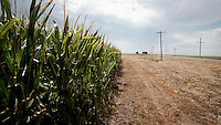 A field, in south west Kansas, of genetically modified corn.