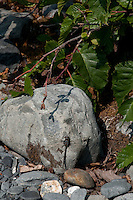 A dragonfly rests for a moment on a piece of glacial rock.