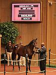 Hip #645 Big Brown - Cold Awakening colt sold for $825,000. consigned by Warrendale sales.  September 12, 2012.