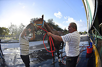 HALLANDALE, FL - APRIL 15: (EXCLUSIVE COVERAGE) Trainer Antonio Sano went from being kidnapped twice in Venezuela to training a Kentucky Derby contender Gunnevera. Gunnevera Seen here breezing 5 furlongs in 1 minuet flat on the track for one of his final workouts before the Kentucky Derby where he will be one of the favorites. Seen here at Gulfstream Park on April 15, 2017 in Hallandale, Florida <br /> <br /> People:  Gunnevera