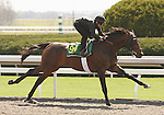 07 April 2011.  Hip #94 Empire Maker - Assess colt, consigned by Wavertree Stables.