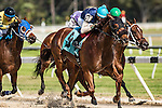 OLDSMAR, FL - JANUARY 21: Money Tree #9 (turquoise cap), ridden by Edwin Gonzalez, crosses the finish line, and wins the 4yr olds and up claiming race, on Skyway Festival Day at Tampa Bay Downs on January 21, 2017 in Oldsmar, Florida. (Photo by Douglas DeFelice/Eclipse Sportswire/Getty Images)