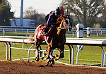 October 20, 2015:  Catch A Glimpse (outside) works for trainer Mark Casse in preparation for the Breeder's Cup Juvenile Fillies Turf.  Candice Chavez/ESW/CSM
