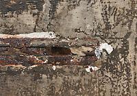 Wasser-Fledermaus, Wasserfledermaus, Versteck, Überwinterung, Winterquartier in einem Mauerspalt, Myotis daubentoni, Myotis daubentonii, Daubenton's bat