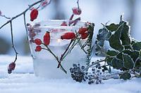 Eislicht, Eislichter, Eis-Licht, Eis-Lichter, Windlicht aus Eis, Kerze brennt innerhalb einer Eisschale, die mit eingefrorenen, im Eis eingeschlossenen Naturmaterialien dekoriert ist, Deko, Eis und Schnee