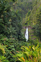 Akaka Falls. Akaka Falls State Park. Hawaii, The Big Island