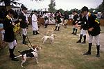 Beagle Puppy Show. South of England County Show. Ardingly, Haywards Heath 2000s