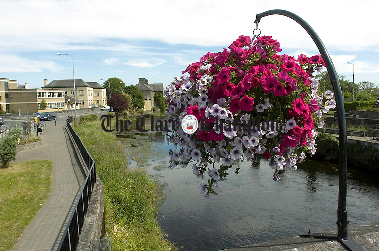 Flowers in bloom at the Mill area of Ennis. Photograph by John Kelly.