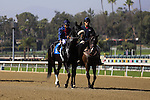 Eblouissante a half sister to Zenyatta with Mike Smith aboard in the post parade for an allowance race at Santa Anita Park in Arcadia, California on February 13, 2014. (Zoe Metz/ Eclipse Sportswire)
