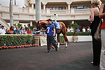 Fast Falcon in the walking ring before the 57th running of the Donn Handicap (G1) at Gulfstream Park.  Hallandale Beach Florida. 02-09-2013
