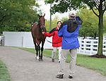 Hip #131 Distorted Humor - Mushka colt at the  Keeneland September Yearling Sale.  September 9, 2012.
