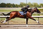 #162Fasig-Tipton Florida Sale,Under Tack Show. Palm Meadows Florida 03-23-2012