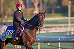 OCT 29 2014:Trade Storm, trained by David Simcock, exercises in preparation for the Breeders' Cup Mile at Santa Anita Race Course in Arcadia, California on October 29, 2014. Kazushi Ishida/ESW/CSM