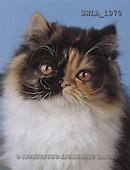 Carl, ANIMALS, photos(SWLA1970,#A#) Katzen, gatos