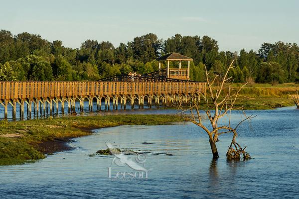 Boardwalk along Nisqually River delta/estuary at Billy Frank Jr. Nisqually National Wildlife Refuge, WA.  July.  Evening at high tide.