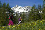 Paturages en  fleurs près du lac de Roue dominé par le pic du Cros (2695 m) entre Arvieux et Chateau Queyras<br /> Flowered high mountain pasture nearby Roue lake between Arvieux valley and Chateau Queyras valley