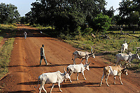 SOUTH SUDAN  Bahr al Ghazal region , Lakes State, road Juba to Rumbek, Dinka shepherd with grazing Cebu Cows / SUED-SUDAN  Bahr el Ghazal region , Lakes State, Rumbek , Zeburinder Herde