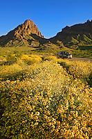 A car passes by wildflowers along Route 66, near Oatman, Black Mountains, Arizona.