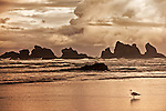 Gold toned image of seastacks at Bandon Beach with lone seagull