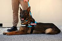 20210329 Cani addestrati a riconoscere il Covid-19