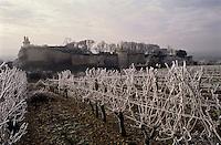 Europe/France/Centre/37/Indre-et-Loire/Chinon: Le château et les vignes - AOC  Chinon