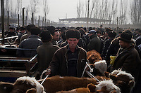 Uighur men trade livestock at the Kashgar Sunday Animal Market in Kashgar, Xinjiang, China.  For hundreds of years, the Kashgar Sunday Animal Market was a weekly fixture on the streets of the city.  In the 1990s, in a government bid clean up the city, the market was moved to a special facility outside the city.