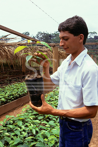 Juruena, Mato Grosso State, Brazil. Agronomist inspecting a tree seedling at a reforestation project nursery.