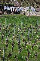 Europe/Europe/France/Midi-Pyrénées/46/Lot/Anglars: Vignoble AOC Cahors et linge séchant