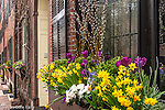 Window boxes on Beacon Hill, Boston, Massachusetts, USA
