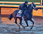 October 28, 2015 :   Rachel's Valentina, trained by Todd A. Pletcher and owned by Stonestreet Thoroughbred Holdings LLC, exercises in preparation for the The 14 Hands Winery Breeders' Cup Juvenile Fillies at Keeneland Race Track in Lexington, Kentucky on October 28, 2015. Scott Serio/ESW/CSM