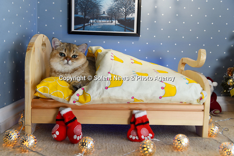 "Cat-crazy Anna Mikulich has made her pampered pet its own bedroom - complete with a hand-made bed, Christmas tree and chandelier.  Mrs Mikulich, 35, built her six month old feline Finn his specially made room in an attempt to stop him sleeping on her pillow every night.<br /> <br /> The wedding photographer says he threw herself into the unusual project as she had more time than usual on her hands due to it being a quiet year for weddings.  The mother of two, from Basingstoke, Hants, said: ""Finn spends most of the night with us, trying to take over our pillows or laying on top of us.  SEE OUR COPY FOR DETAILS.<br /> <br /> © Roger Arbon/Solent News & Photo Agency<br /> UK +44 (0) 2380 458800"