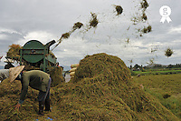 Farmers using a threshing machine to process rice (Licence this image exclusively with Getty: http://www.gettyimages.com/detail/83154221 )