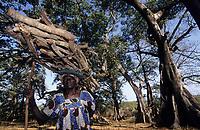 Afrique/Afrique de l'Ouest/Sénégal/Parc National de Basse-Casamance/Diembering : Femme portant du bois et fromagers