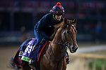 October 30, 2018 : Lightning Spear (GB), trained by David Simcock, exercises in preparation for the Breeders' Cup Mile at Churchill Downs on October 30, 2018 in Louisville, Kentucky. Michael McInally/Eclipse Sportswire/CSM
