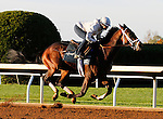 October 16, 2015:  Sticksstatelydude works in preparation for the Breeder's Cup Juvenile.   Candice Chavez/ESW/CSM