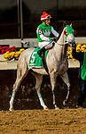 DECEMBER 01, 2018 : Jennifer's Dream in the Demoiselle Stakes at Aqueduct Racetrack on December 24, 2018 in Ozone Park, NY.  Sue Kawczynski/ESW/CSM