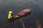 Five women stand in shallow water collecting bright pink and white water lilies as their boats drift nearby.  They spread the long plants out in a circle around themselves and let them float on the surface as they harvested them.<br /> <br /> The white water lilies, locally known as 'ghost flowers', only bloom after the sun sets - meaning the workers have to rush to pick the flowers in time.  Amateur photographer Diem Ngoc pictured the harvest in Long An Province, Vietnam.  SEE OUR COPY FOR DETAILS.<br /> <br /> Please byline: Ngoc Diem/Solent News<br /> <br /> © Ngoc Diem/Solent News & Photo Agency<br /> UK +44 (0) 2380 458800