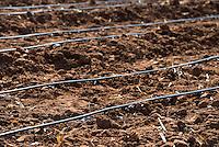 MALAWI, village Zingiziwa, installation of drip irrigation system / MALAWI, Dorf Zingiziwa, Aufbau eines drip irrigation system in Zusammenarbeit mit dem NRC national resource centre