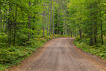 A scenic road in the Chequamegon National Forest in northern Wisconsin.