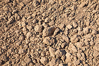 Dry cloddy field conditions - Lincolnshire, April
