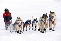 An Iditarod sled team and musher underway. Alaska.
