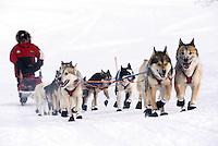An Iditarod sled team and musher underway. Alaska.