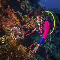 11 June 2014: SCUBA diver Sally Herschorn explores the drop-off and reef scenery at Lemon Wall, on the North Shore of Grand Cayman Island. Located in the British West Indies in the Caribbean, the Cayman Islands are renowned for excellent scuba diving, snorkeling, beaches and banking.  Mandatory Credit: Ed Wolfstein Photo *** RAW (NEF) Image File Available ***