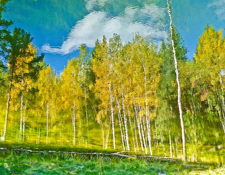 """""""THE ILLUSION OF FALL""""<br /> <br /> White clouds drifting in blues skies. Bright colored aspen dressed in golden fall finery. A beautiful landscape to be sure. But, is it real or just an illusion? ORIGINAL 24 X 36 GALLERY WRAPPED CANVAS SIGNED BY THE ARTIST $2,500. CONTACT FOR AVAILABILITY."""