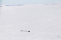 Tuesday March 13, 2012  Ken Anderson on Golovin Bay nearing White Mountain Checkpoint. Iditarod 2012