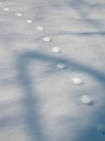 Forprints in the snow in Niseko, Hokkaid?, Japan